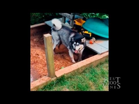 ULTIMATE FUNNY ANIMALS IN MUD - Best Animal Videos March 2019  Best100Vines
