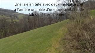 Chasse-sur-Rhone France  city photos : Chasse Sanglier en Battue - Affoux - Rhône - France - 2014