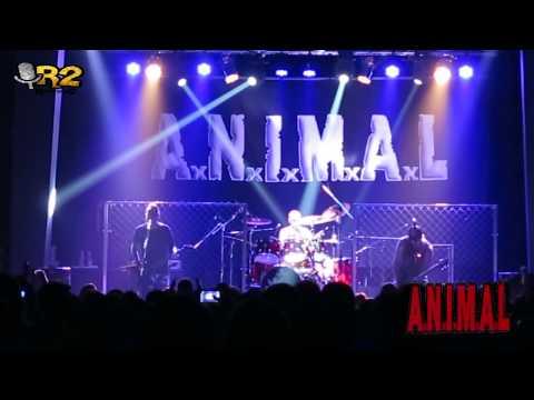 COBERTURAS: A.N.I.M.A.L en  Rosario 11-7-2015