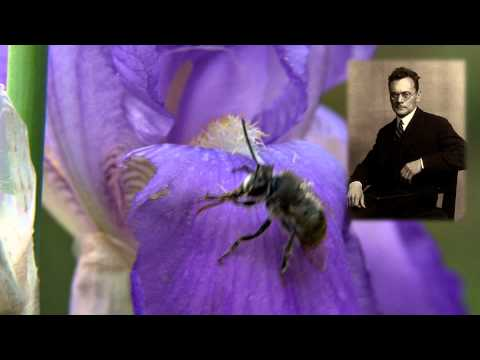Bee Waggle Dance