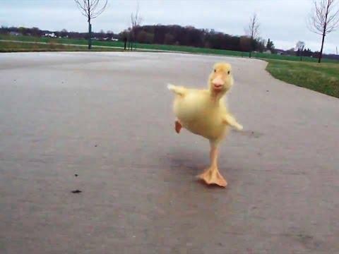 Duck Run (видео)