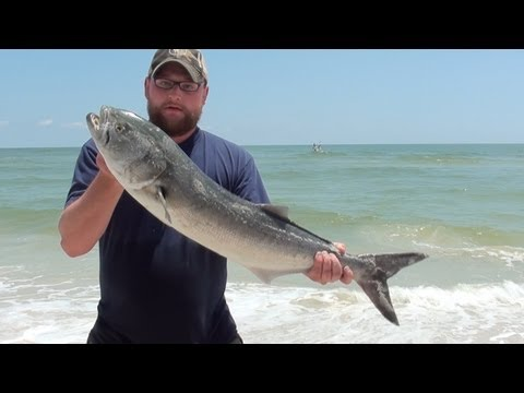 Tarpon! Redfish! Oh, Bluefish! – Cape San Blas, FL