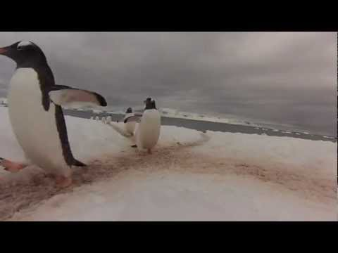 "Student Captures Video of a ""Penguin Highway"" in Antarctica"