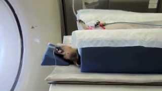 Operace páteře psa | vyhřezlé ploténky