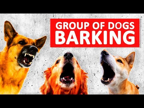Group Of Dogs Barking Sounds To Make Your Dog Bark HD