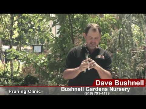 Bushnell Landscape Pruning Workshop with ARS Tools – Part 1