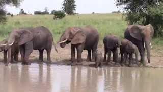 Tarangire Tanzania  city pictures gallery : Elephants at waterhole in Tarangire Tanzania