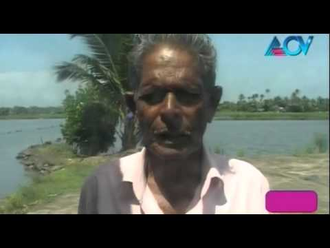 Business Beats – No relief for Prawn farmers