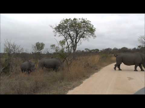 Baby Rhino zuid afrika sept 2013