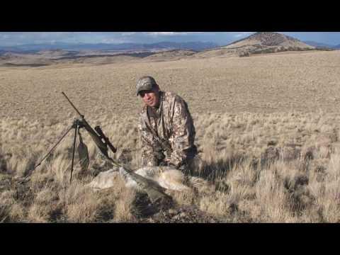 Coyote Hunting   Predator Hunting 3 BTO