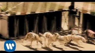 LOQUILLO Y LOS TROGLODITAS - El hijo de nadie