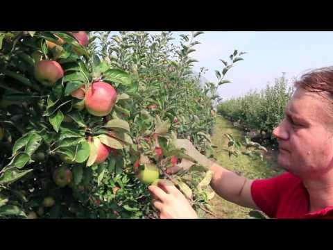 Видеоролик о Всероссийской сельскохозяйственной переписи 2016