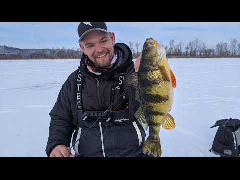 Ice Fishing Shallow Water Jumbo Perch on the Mississippi River - In Depth Outdoors TV S15 E9