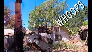 Video Black Oak Tree Slices Through Garage MP3, 3GP, MP4, WEBM, AVI, FLV September 2019