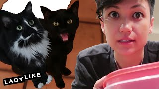 Video Dog Lover Housesits Cats For The First Time • Jen And Devin MP3, 3GP, MP4, WEBM, AVI, FLV Agustus 2018