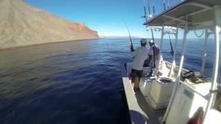 Fishing for Dorados with Enrique Daggett from Daggett's campground. Filmed Sept 17th 2013 with a GoPro Black. Dorado also...