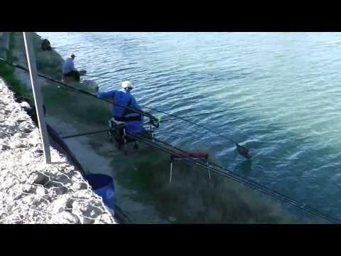 Pesca del carpin en riola 2014.