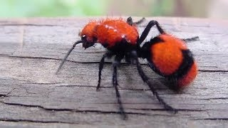 Worst Insect Stings in the World by Epic Wildlife