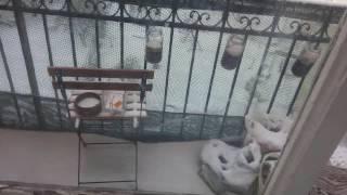 Video Plachý host - Zimní