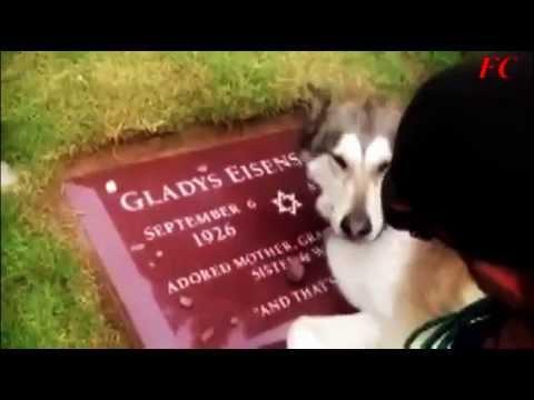 cane piange sulla tomba del padrone! commovente!