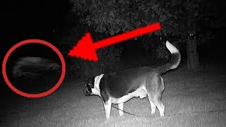 Video 5 Dogs That Saw Something Their Owners Couldn't See : ESP and the Supernatural MP3, 3GP, MP4, WEBM, AVI, FLV September 2019