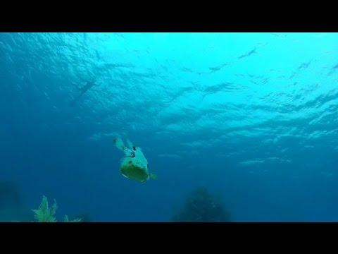 Belize snorkeling vacation_Merülő helyek