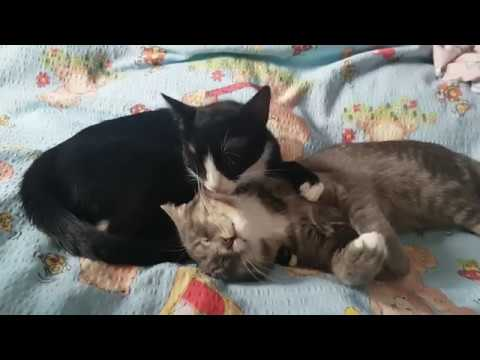 Funny cat videos - Funniest  Cats - Awesome Funny Pet Animals' Life Videos