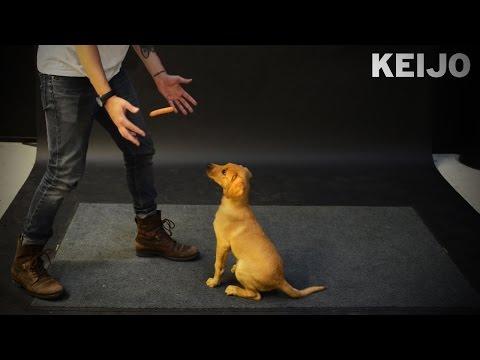 魔術師給狗狗們表演「懸浮香腸」魔術,牠們「超乎預期的反應」害我笑到岔氣了!