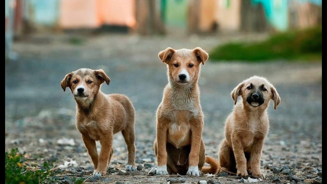 Διαβουλεύσεις : Ένα εγχειρίδιο γιά όλες τις ημέρες των ζώων  (05/10/2019)