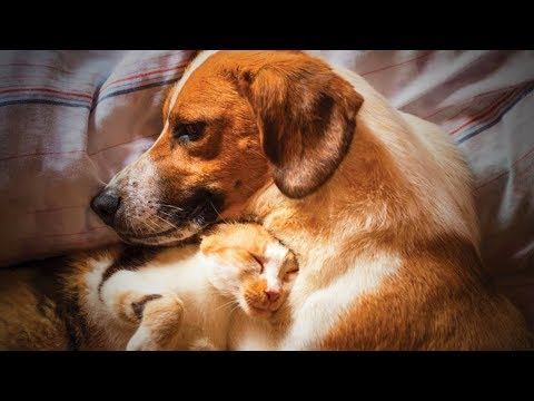 Funny cat videos - Cute Animals  Funniest Cats And Dogs Moments (Full) [Funny Pets]