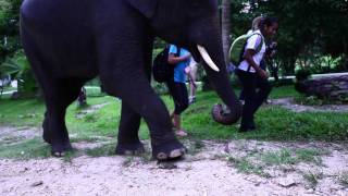 Thailand Video Rock Climbing Thailand And Thailand Elephants