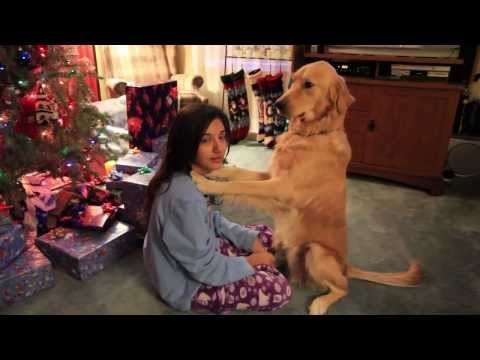 golden retriever kissing a girl and getting a present