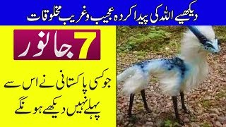 Download Video 7 Animals You've Never Seen Before - Purisrar Dunya - Urdu Documentary MP3 3GP MP4