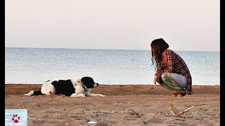 A lonely summer dog who lived on a beach by The Orphan Pet