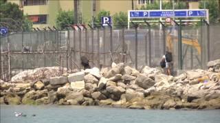 Western Beach users claim smuggling across the beach and into Spain, in broad daylight, is a daily occurrence. While filming a ...