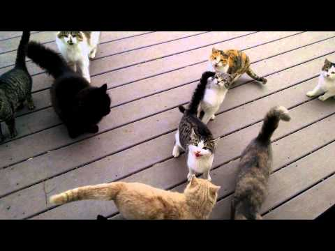 Adorable Hungry Herd Of Cats Demands Tribute
