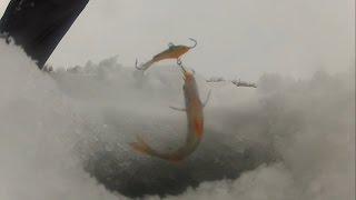 3января 2015. Зимняя рыбалка. Окуни матросики на блесну и балансир + подводные съемки