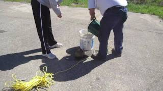 A Mother Duck Out For A Walk And Loses All 12 Of Her Ducklings. This Is Footage From That Rescue Operation