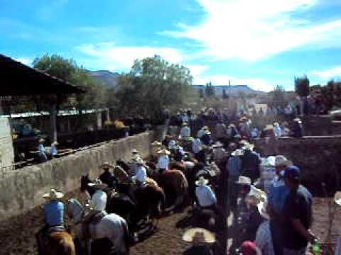 Coleadero en Majadas Vilanueva Zacatecas 01/01/2011