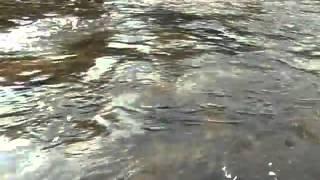Fliegenfischen Aschen, Dunajec Fluss in Polen, ende September