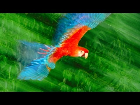 photos - Nature photographer Frans Lanting uses vibrant images to take us deep into the animal world. In this short, visual talk he calls for us to reconnect with other earthly creatures, and to shed...