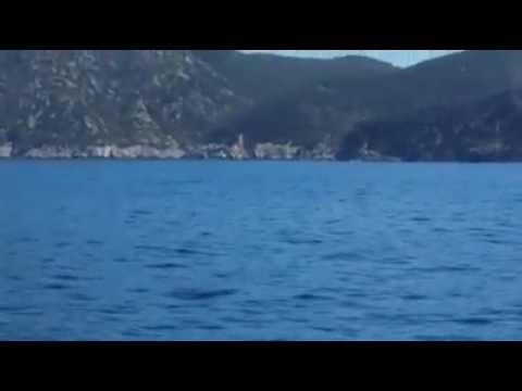 balena all'Elba - Video di Silverio Di Meglio