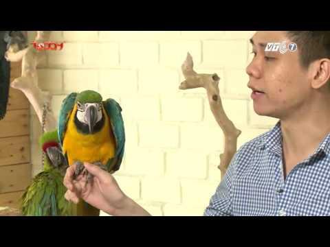 Kỳ 3: Giới thiệu về loài Vẹt - Thú Cưng TV