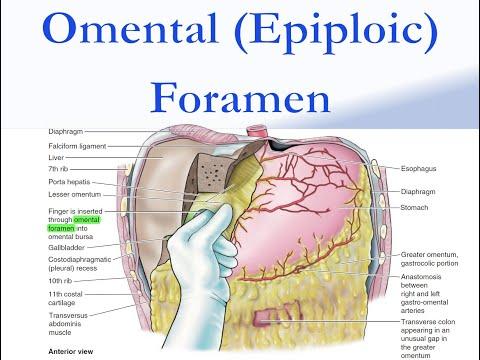 Omental (Epiploic) Foramen