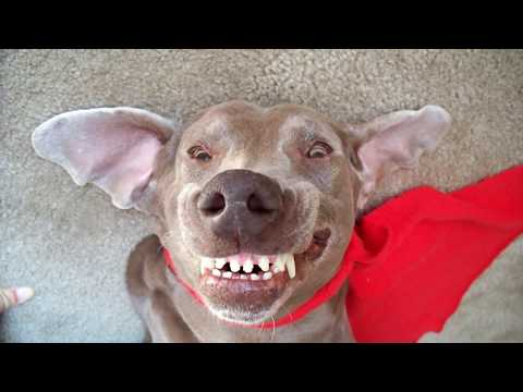 Dog farts and makes a super funny face