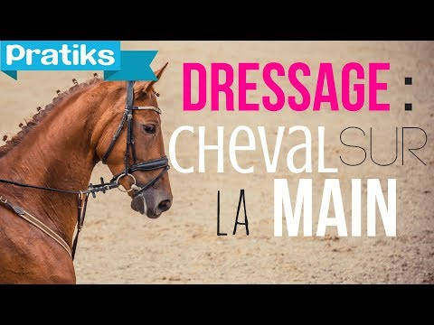 comment monter a cheval quand on a ses regles