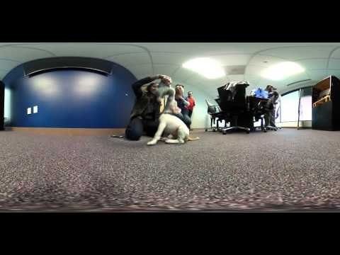 360 video of puppies in the newsroom