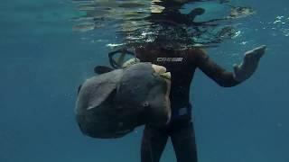 Spearfishing-Vision Ocean Hunter VOH Video