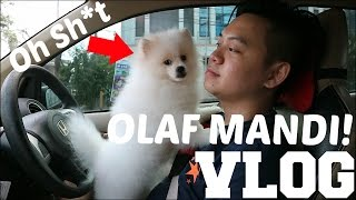 Video AYO KITA MANDIKAN OLAF!!! MP3, 3GP, MP4, WEBM, AVI, FLV Juni 2018