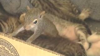 Nov 19, 2013 ... Meet Jill: the most famous pet squirrel on the Internet - Duration: 3:00. SlideShow nForFun 531,509 views · 3:00. Cats are so funny you will die...